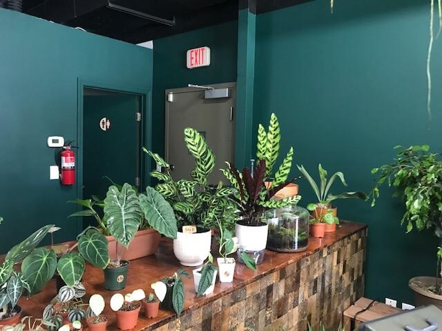 カイムキの可愛い植木屋さん「Plantoem」、カフェもあります。