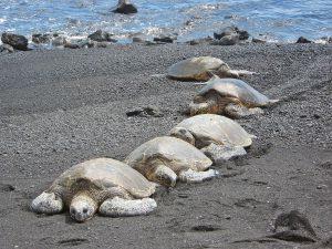 Schildkröten am Strand