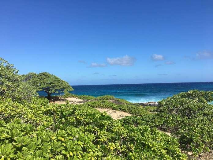 Natur Pur im Makapu'u Beach Park