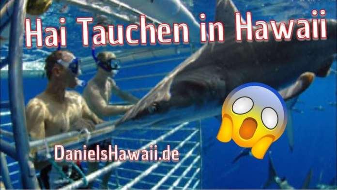 Haie in Hawaii – Hai tauchen im Hawaii Urlaub