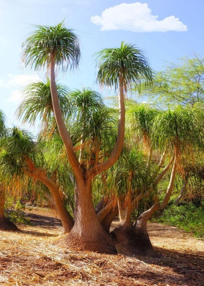 Botanische Gärten auf Oahu