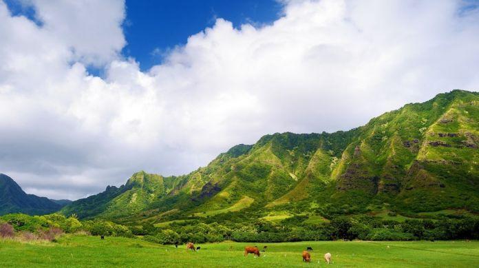 Reise in die Urzeit – Kualoa Ranch, Oahu