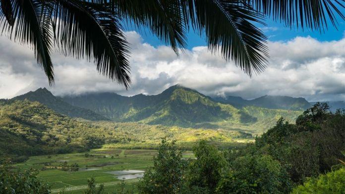 Wie wird das Wetter in Hawaii?