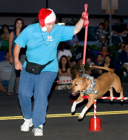 The Orchid Isle Dog Agility group performs during the Lehua Jaycees Island Style Christmas parade in Hilo.