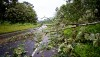 Trees fallen on Highway 130 in Puna from Tropical Storm Iselle Friday, August 8, 2014. Photography by Baron Sekiya   Hawaii 24/7