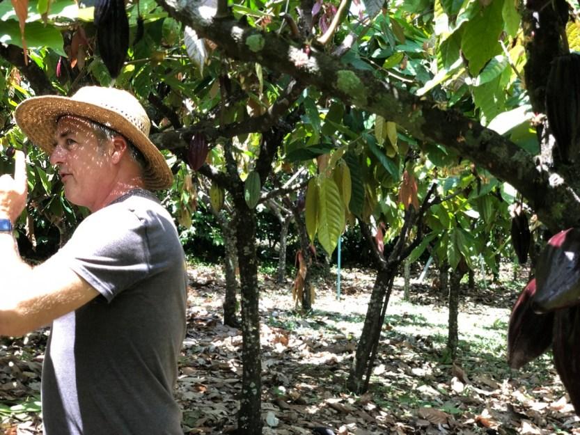 Dan Corson, Hamakua Chocolate Farm, cacao orchard tour