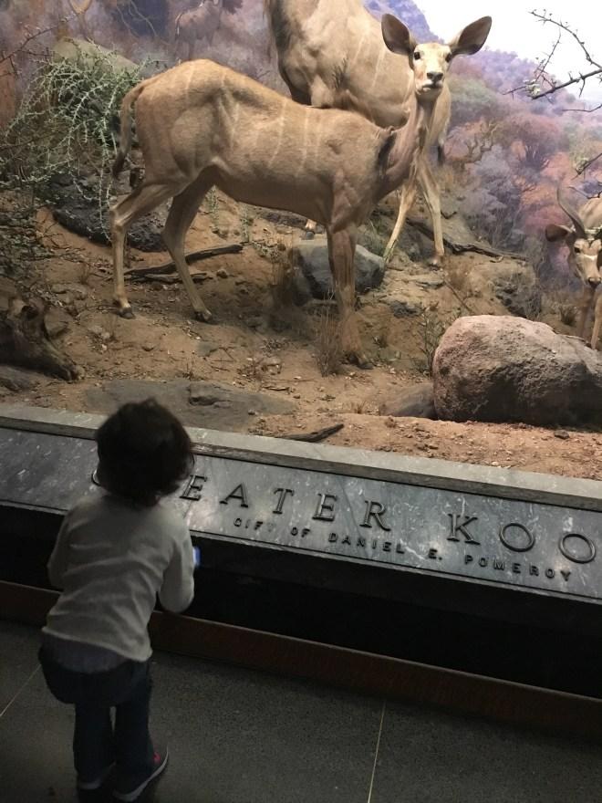 NYC Itinerary: AMNH