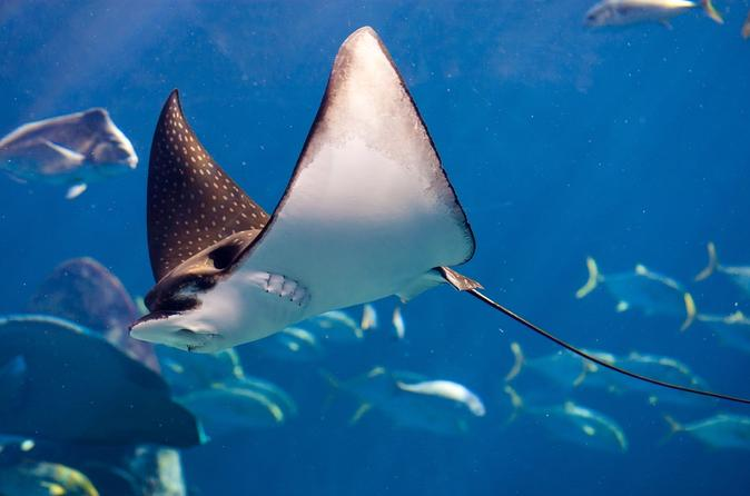 Big Island Manta Ray Night Kayak and Snorkel Adventure on Hawaii