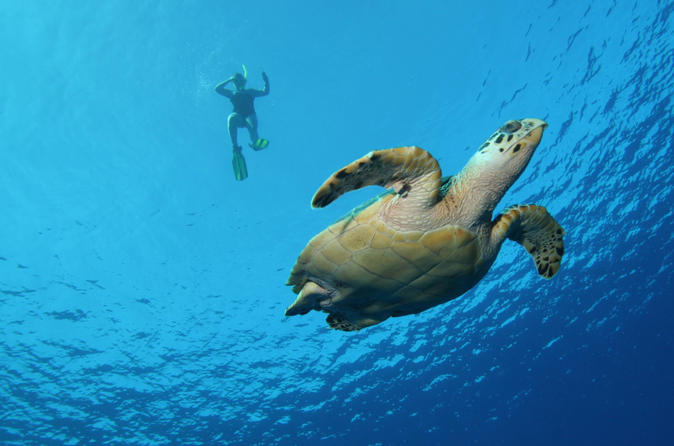 Big Island Snorkel Cruise Along Kohala Coast on Hawaii