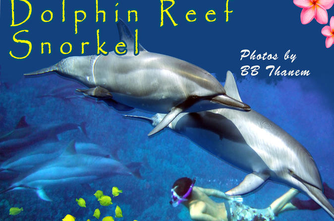 Kona Shore Excursion: Wild Dolphin - Reefs -Sea Caves -Kealakekua Bay Snorkel on Hawaii