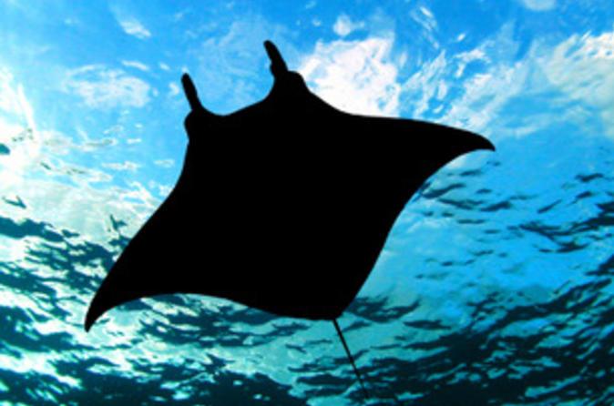 Manta Ray Night Snorkel from Kona on Hawaii