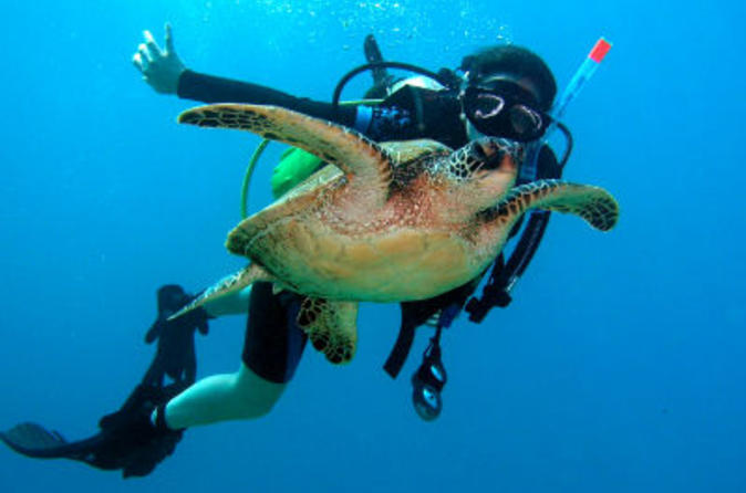 Scuba Diving for Beginners on the Leeward Coast on Oahu