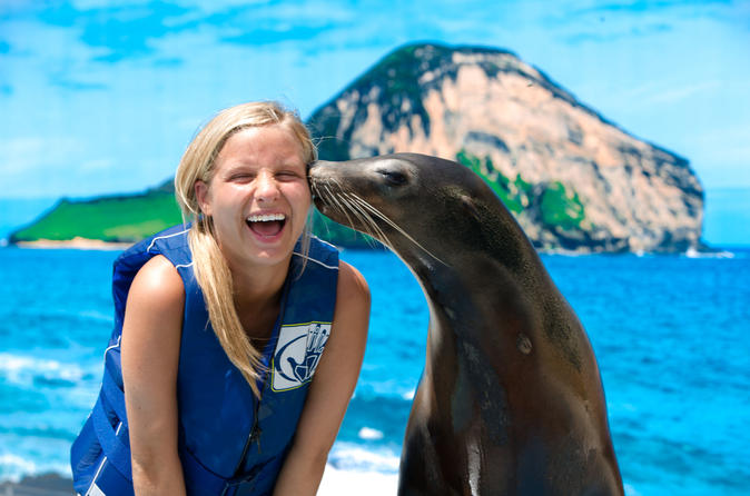 Swim with Sea Lions or Sharks at Sea Life Park Hawaii on Oahu