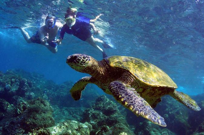 Turtle Reef Kayak Snorkel on Maui