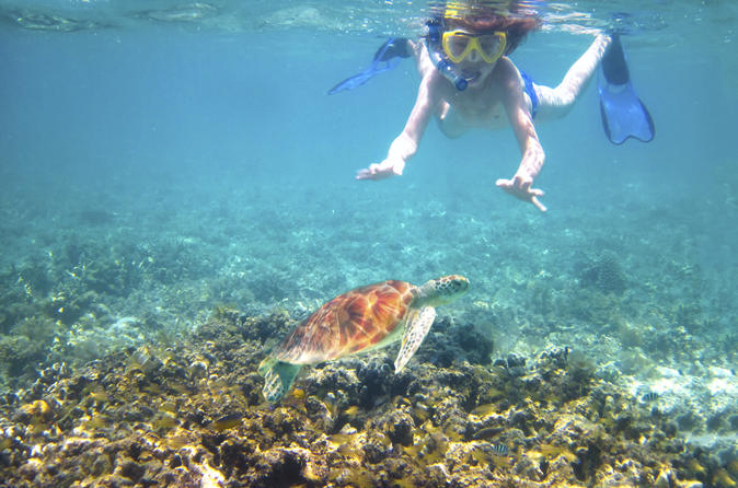 Turtle Reef Kayak Tour on Maui