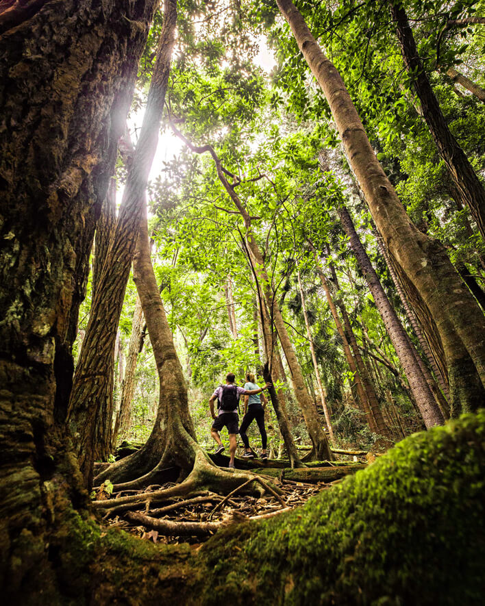 Top 5 Breathtaking Lanai Hikes featured by top Hawaii blog, Hawaii Travel with Kids: Koloiki Ridge Trail, Lanai hiking