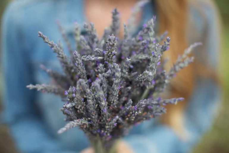 One of the best cheap things to do in Maui with kids is exploring the Ali'i Kula Lavender Farm. Image of a woman holding a bouquet of fresh lavender.