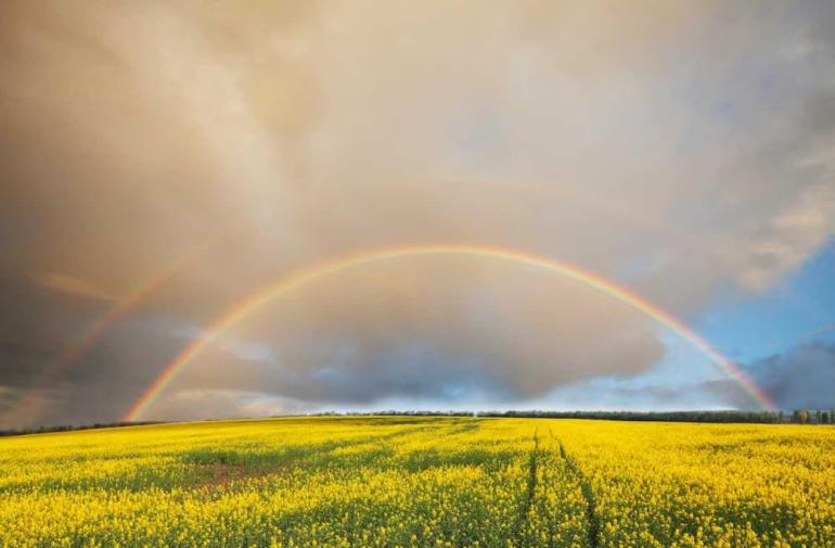 Double rainbows are one of the most special things to see in Oahu. Image of a double rainbow over a flower field.