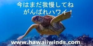 自己隔離処置 ハワイの風