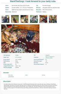 #56 - IMAGE: Create an online dating profile for your pet on a real dating site.