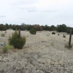 10 acres Tajique NM