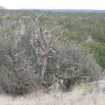 40 acres Loma Parda