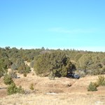 10 acres near forest