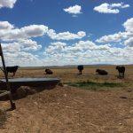 240 Acres Ranch Land