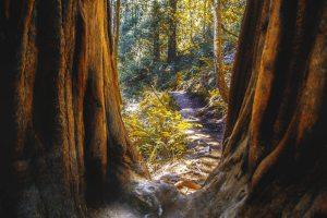 © Jul3s83 | Dreamstime.com - Muir Woods In Northern California Photo
