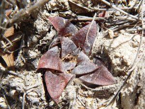 Fig. 68 7960 Kruiskloof