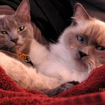 Our Two Cats Sofia and Otto