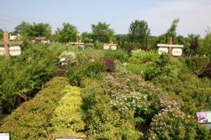 Nursery Plants_1_1