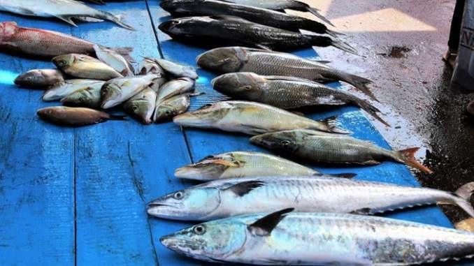 Çocuklarla Kadıköy'de Nerede Balık Yemeli?