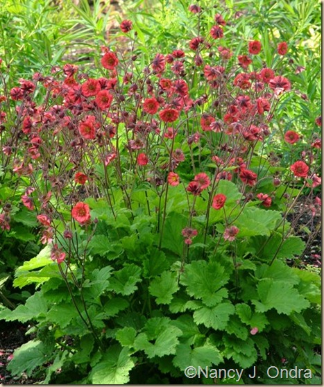 Geum Red Dragon May 28 08