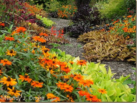 Zinnia Profusion Orange Oct 4 08