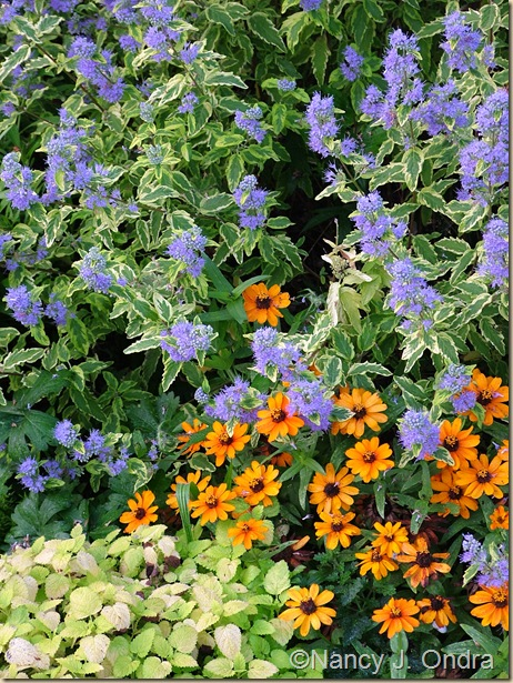 Caryopteris Summer Sorbet Zinnia Profusion Orange Sept 9 07