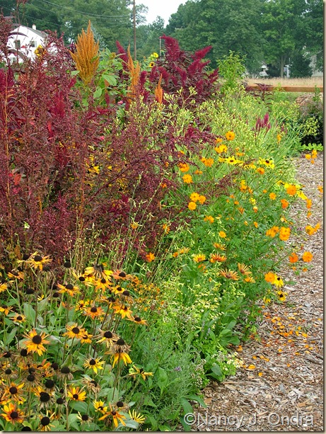 Rudbeckia Chim Chiminee Cosmos sulphureus Atriplex hortensis Rubra Amaranthus Orange Giant and Hopi Red Dye mid August 05