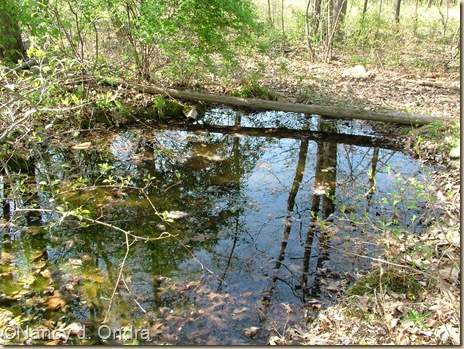 Vernal pool April 24 08