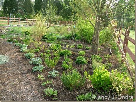 Side garden April 21 10