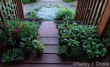Seedlings for fall