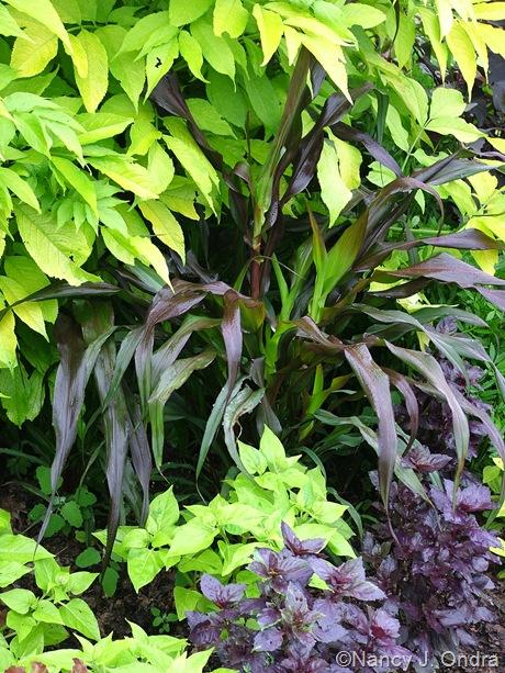 Pennisetum glaucum 'Purple Majesty' with Mirabilis jalapa 'Limelight' and Basil 'Osmin'
