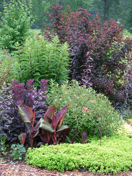 Physocarpus opulifolius 'Monlo' (Diabolo) behind Eupatoriadelpus maculatus, Euphorbia 'Fireglow', Cotinus coggygria 'Royal Purple', Canna 'Phaison' (Tropicanna), and Origanum vulgare 'Aureum' [June 29, 2005]