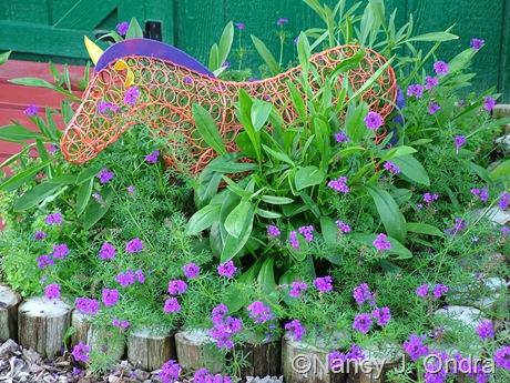 Verbena 'Imagination' mid-August 2011