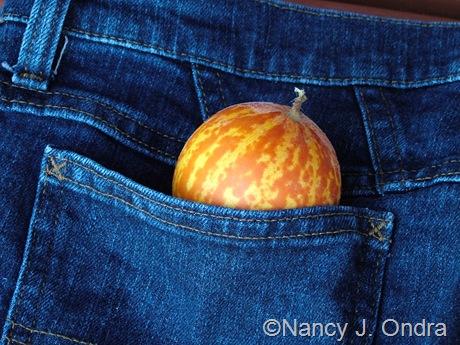 Pocket melon (plum granny) mid-September 2007