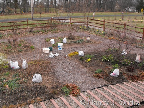 Front garden at Hayefield March 2012