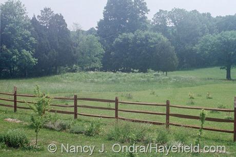Side Garden at Hayefield (August 2003)