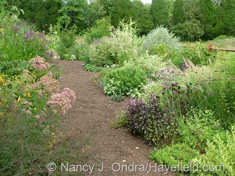 Side Garden at Hayefield (August 2006)