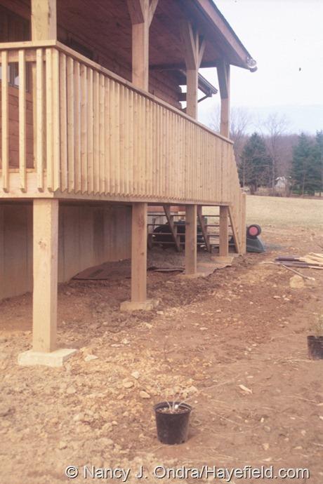 The Shade Border at Hayefield (Spring 2002)