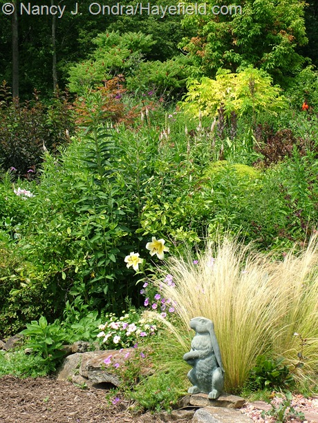 Side garden at Hayefield with Stipa tenuissima