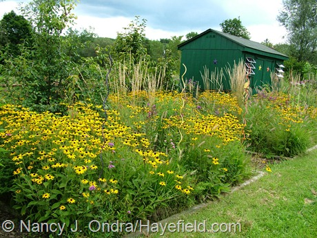 Perennial meadows at Hayefield August 2012